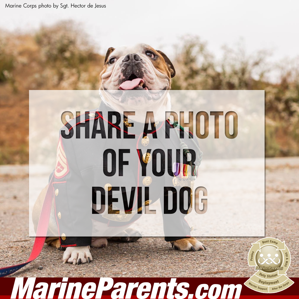 MarineParents.com USMC devil dog