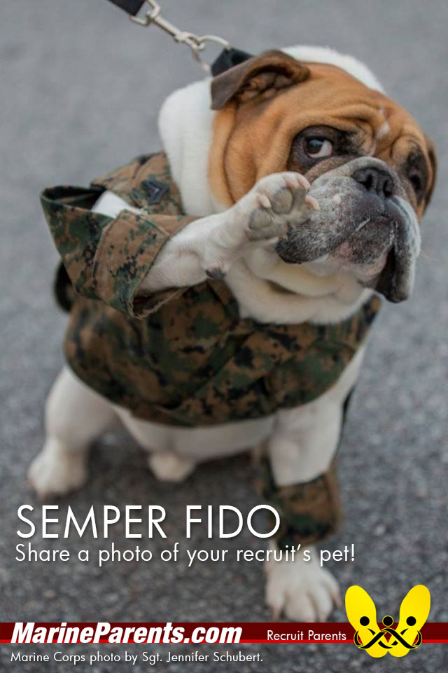 RecruitParents.com USMC your recruit's pet